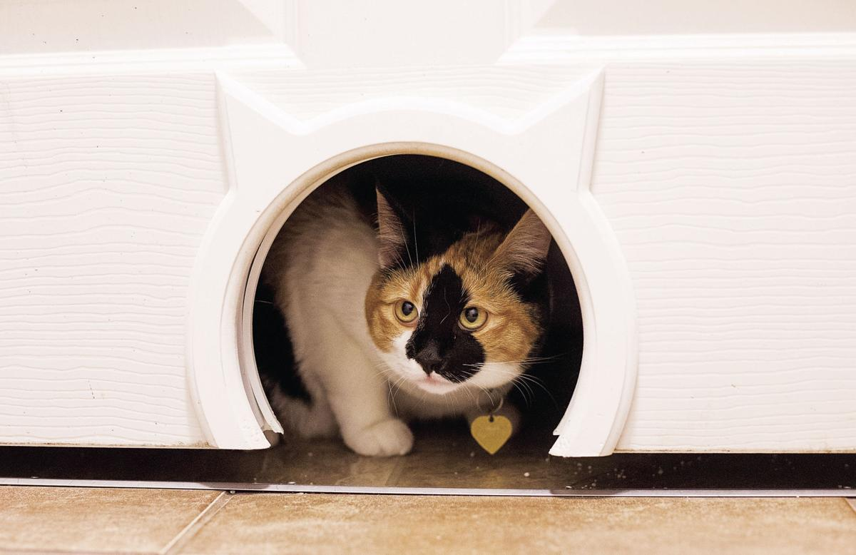 Renting with pets? It can be done | Exclusive | yakimaherald com