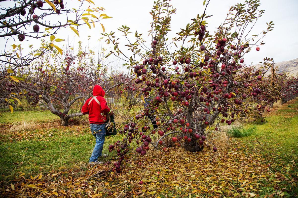Editorial: Congress must vote on farm-labor bill in the fall ...