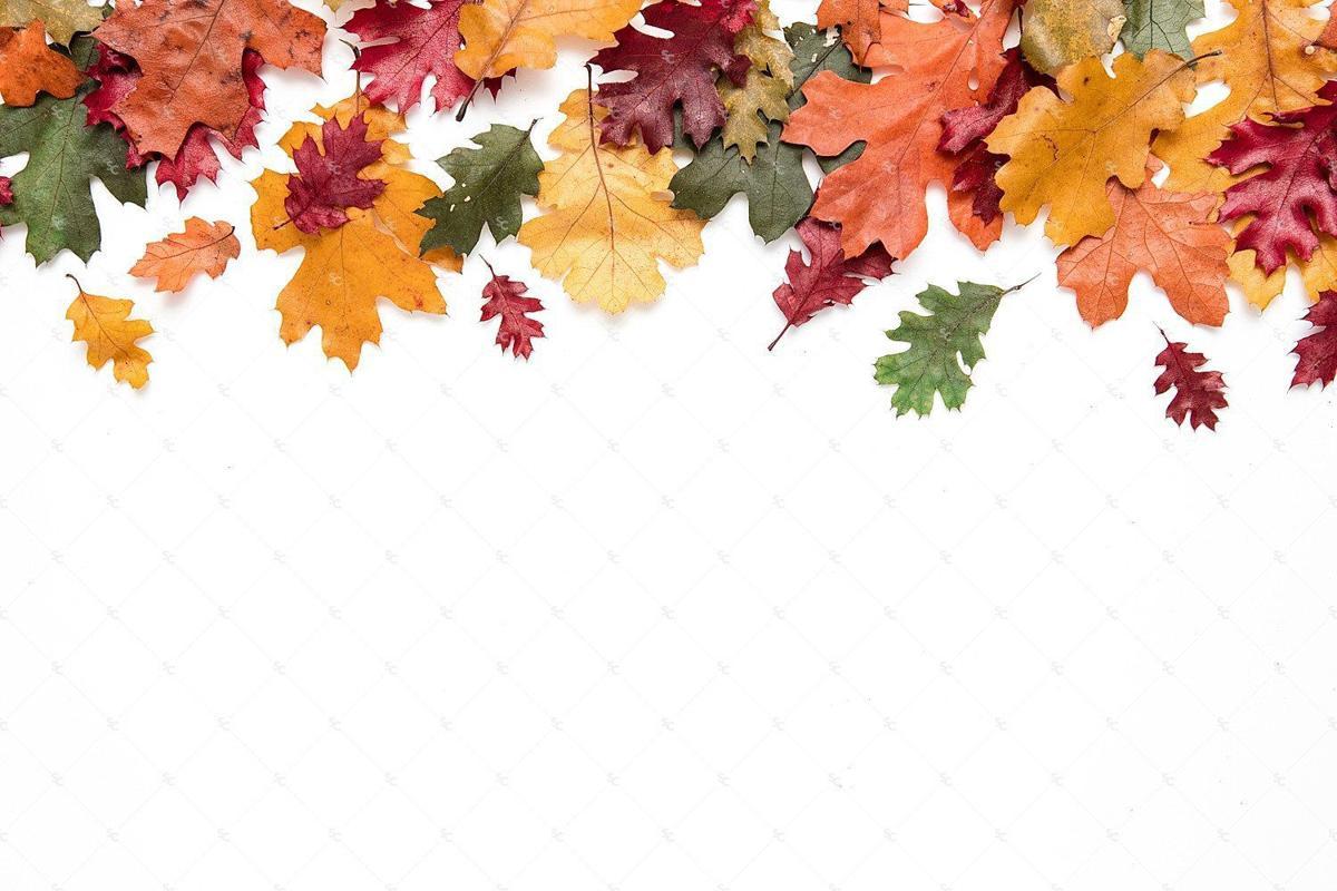 fall gardening 2