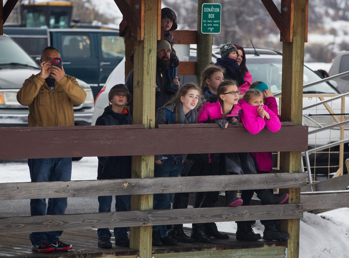 Oak creek wildlife area offers up close look at elk for Fish and game office near me