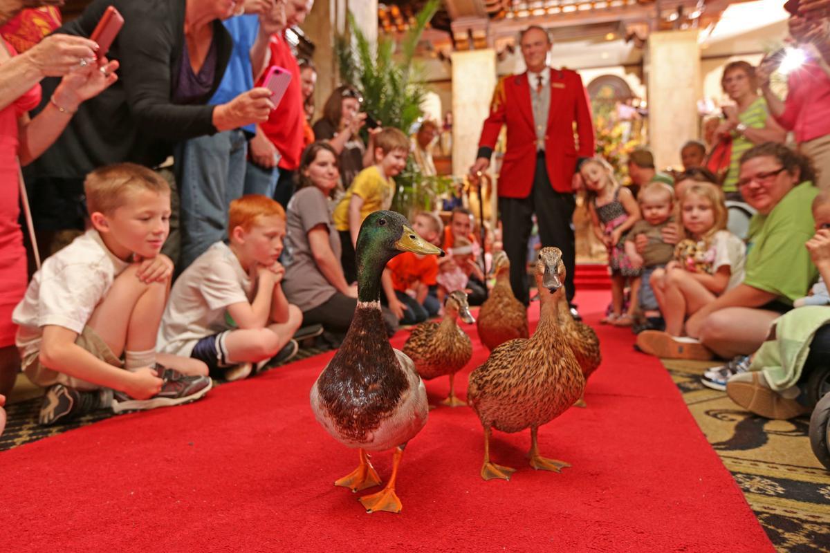 Ducks0125