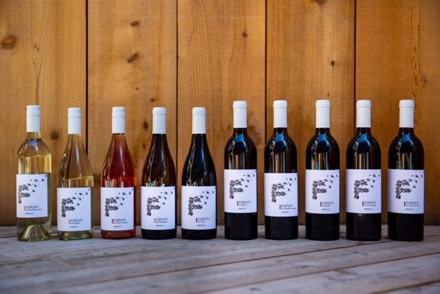 fortuity wine 2