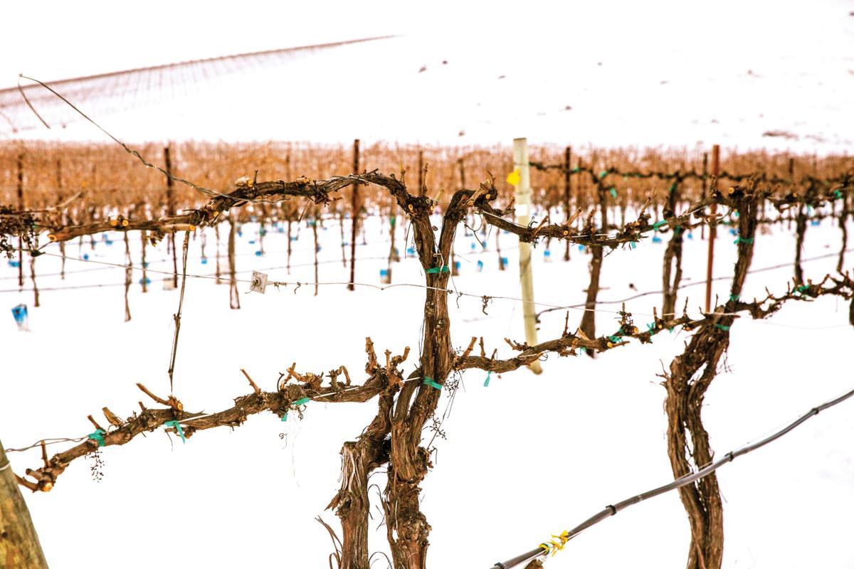 Wine Scene Pruning Grapevines Is Part Science Part Art Scene