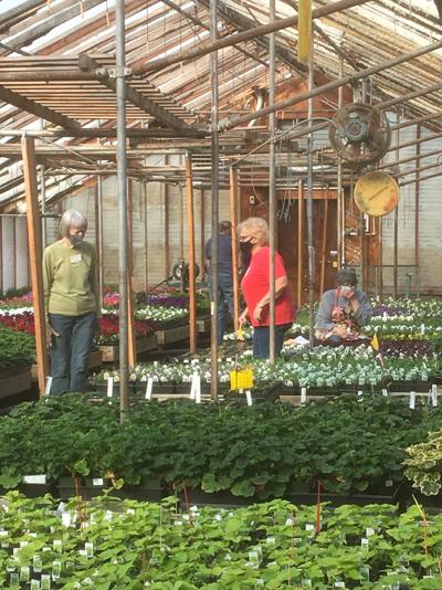 gardening plant sale