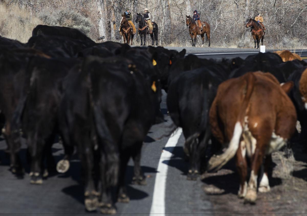 200209-yh-news-cattledrive-2.jpg