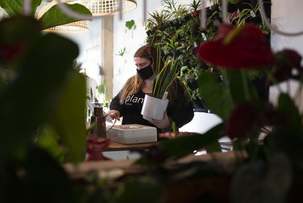 210304-yh-scene-plants-1.jpg