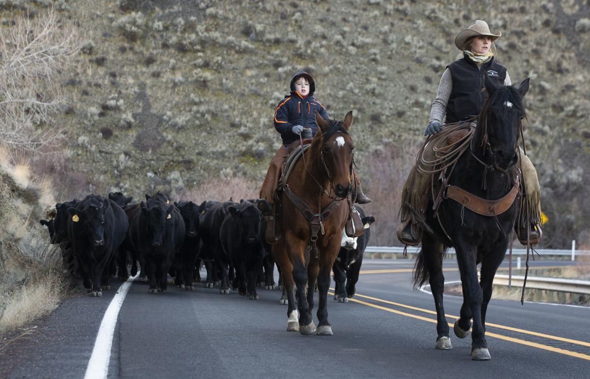 200209-yh-news-cattledrive-1.jpg