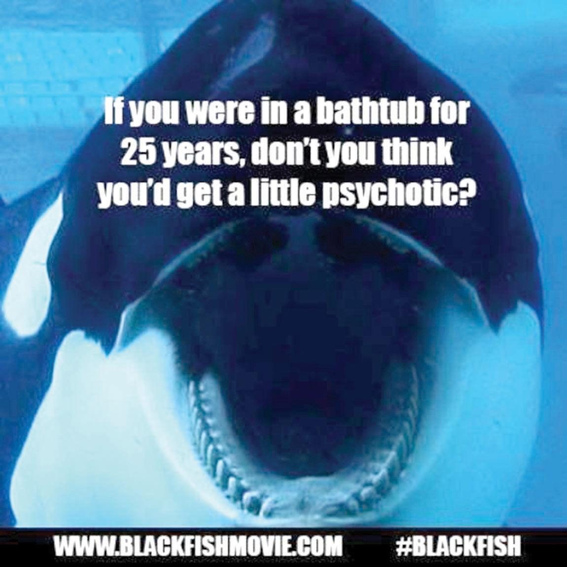u0026 39 blackfish u0026 39  changes minds about orcas in captivity