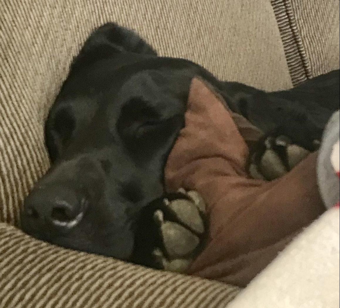 Bailey napping.jpg