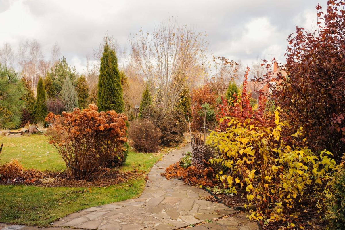 late autumn private garden view with stone pathway and dried hydrangea