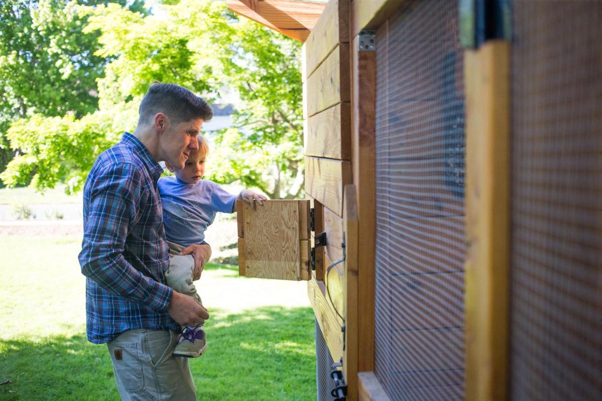 barnyard to backyard chicken coops more common in yakima valley