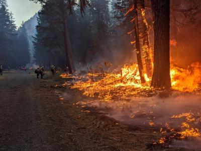 Schneider Springs Fire