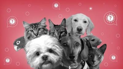 Pets and the coronavirus