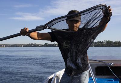 June 26, 2020 | Sockeye salmon tracking study