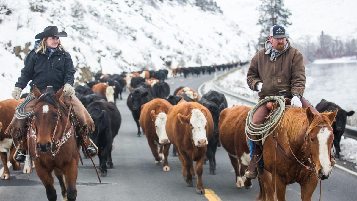 CattleDrive-YH-020919-1.jpg