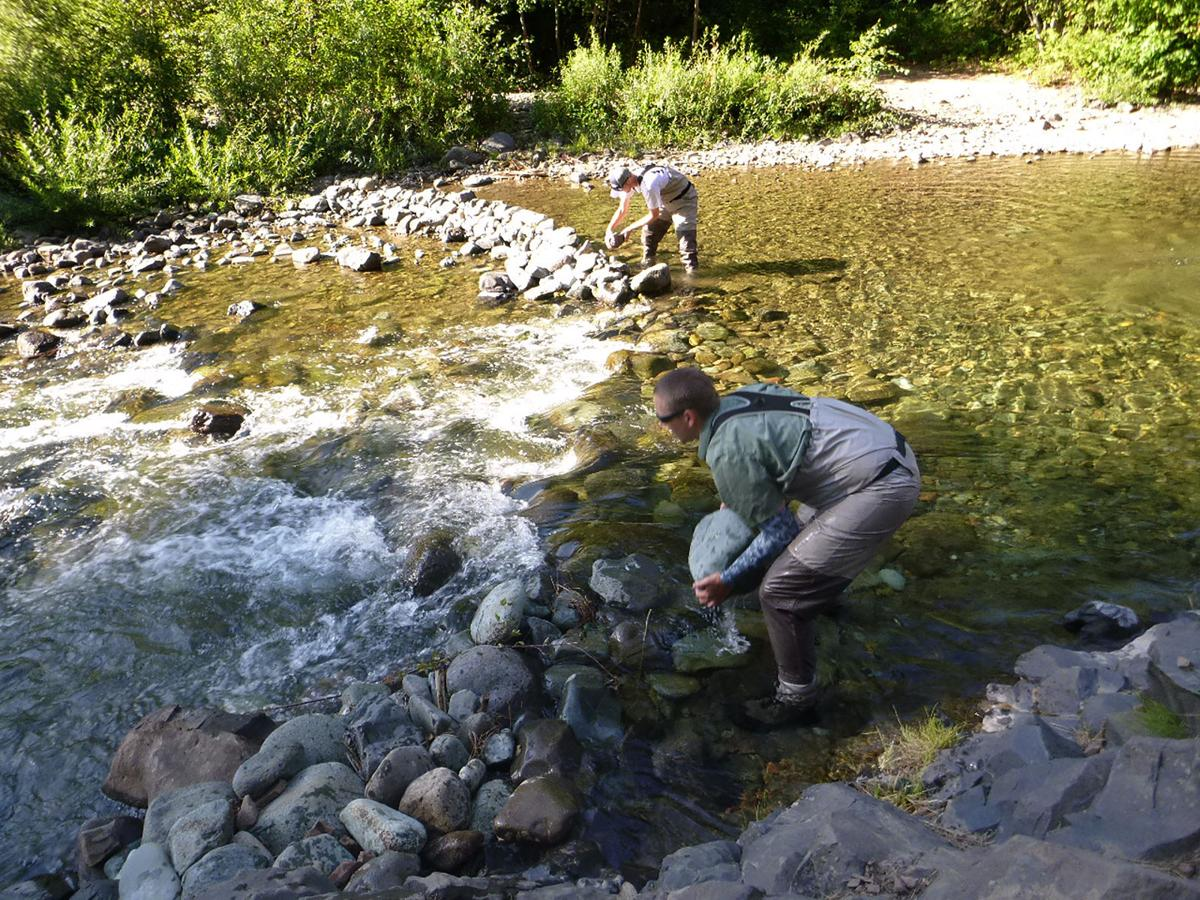 Rock dams causing problems for fish on low flowing rivers for Landscaping rocks yakima