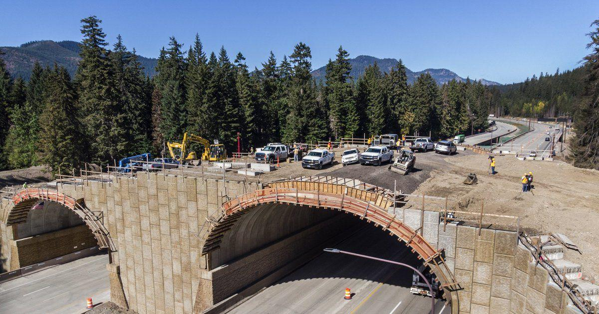 It's a long time coming': $6 2 million wildlife bridge over