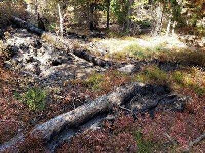 Light fire severity near MJB trailhead