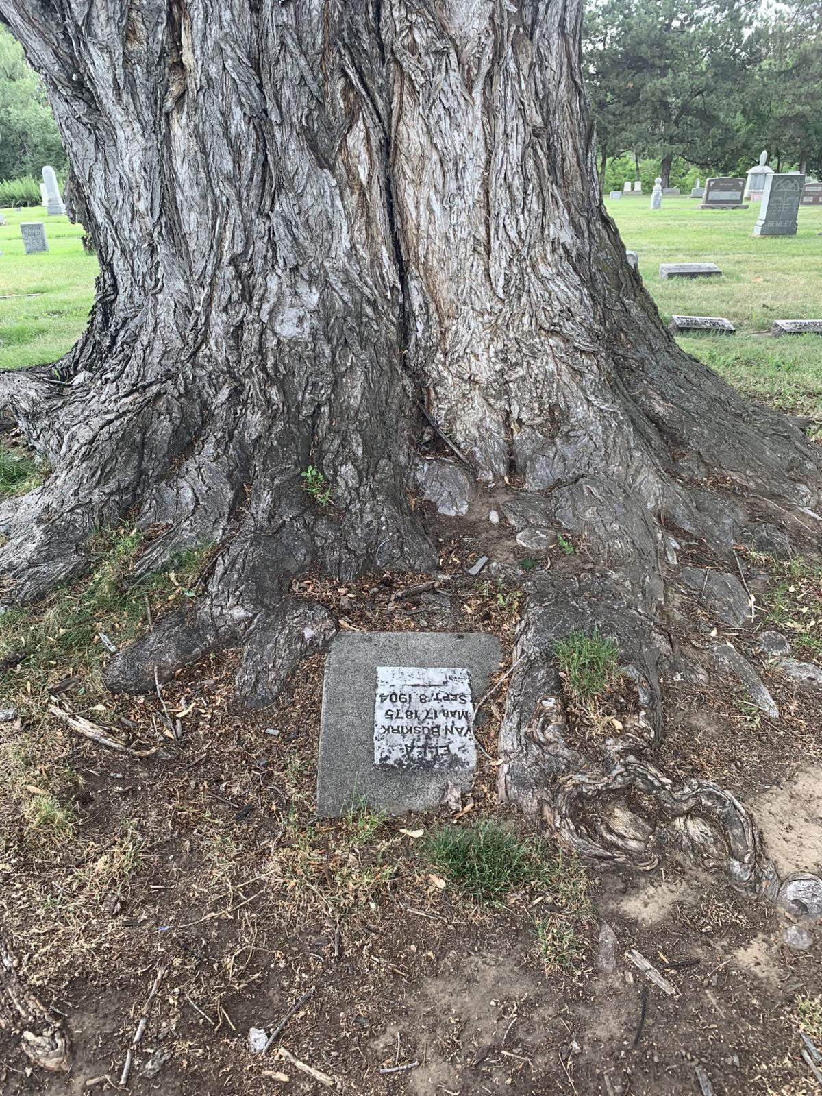 02 tree with headstone.jpg