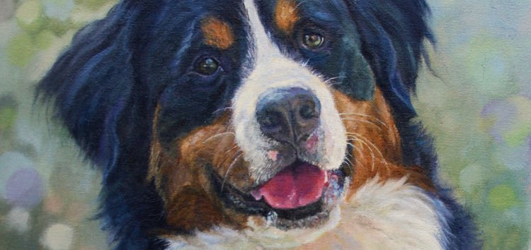 VISIONS-MAIN-Great Burnese Mountain dog- Commissioned portrait, oil on canvas