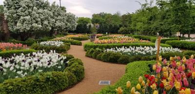 Tulips Galore for Garden's 10th Anniversary!