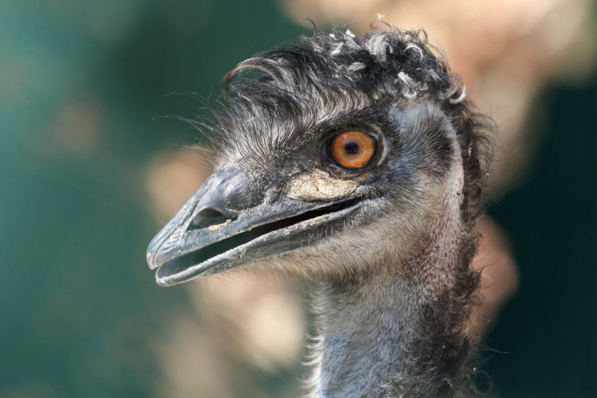 FEATURE-REDDOG-Emu 1.jpg