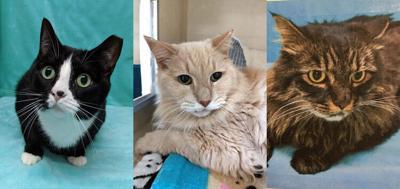 FEATURE-MAIN-Kitties
