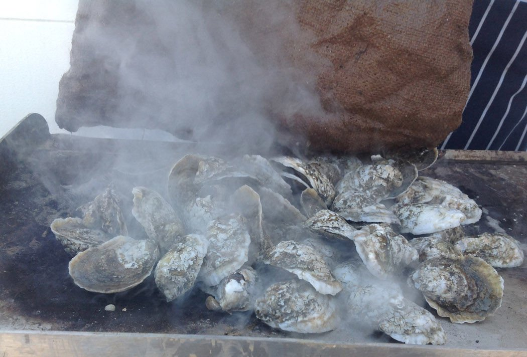 Oysters Closeup by Ian McDowell