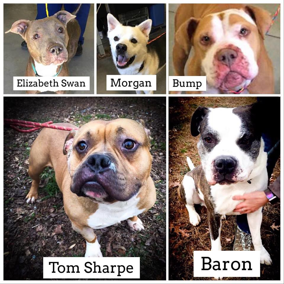 5 of the 8 dogs on the URGENT LIST