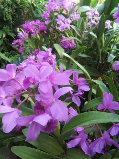 More orchids coming to Selby in mid October