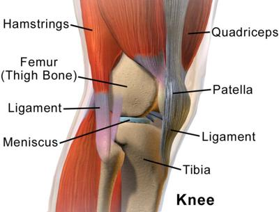 Keeping the knees strong and healthy
