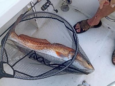 redfish net