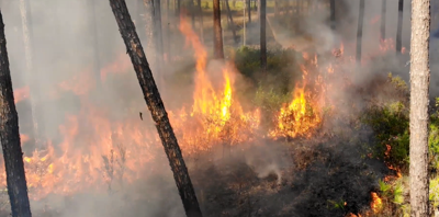 A prescribed fire in Green Swamp Wilderness Preserve