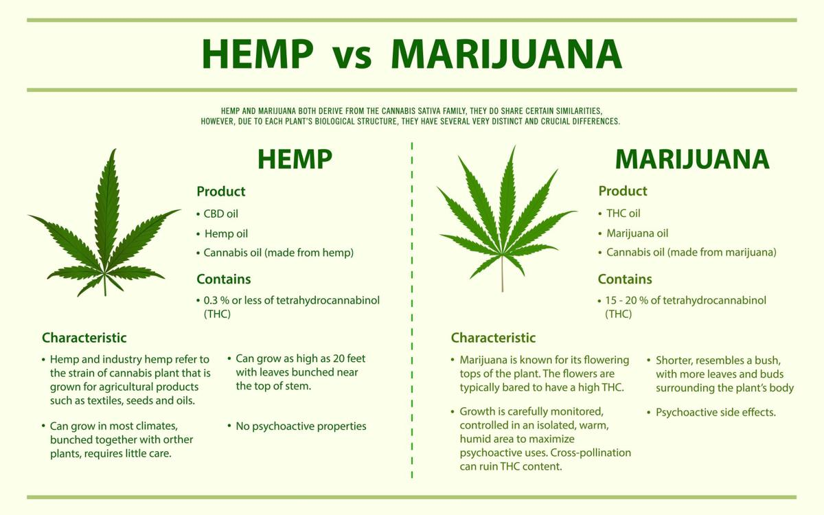 Hemp vs Marijuana vertical infographic