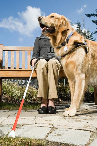 Study suggests service dogs can impact psychosocial health of household