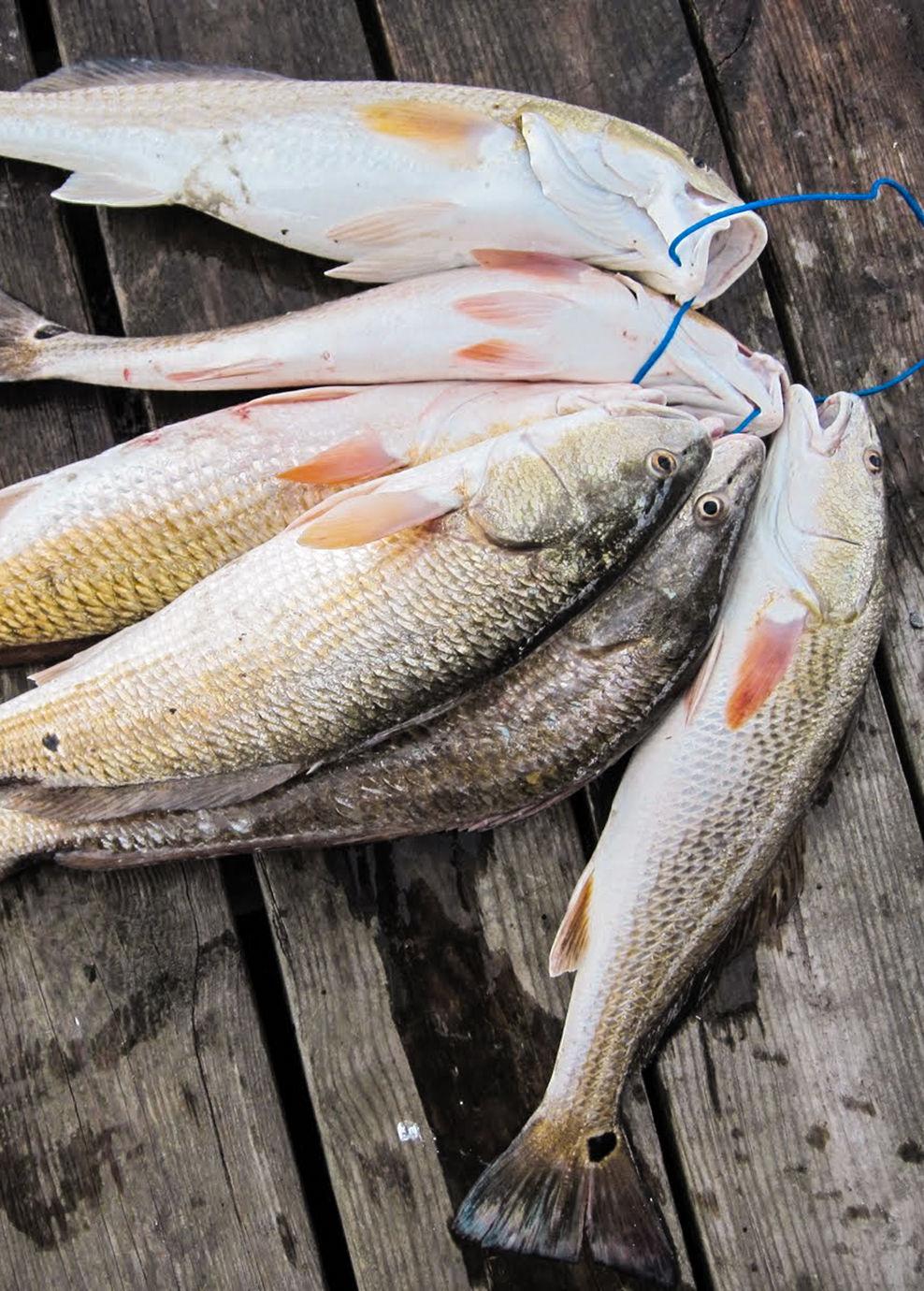 redfish stringer