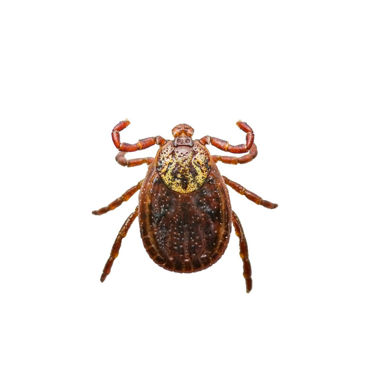 Prevent illness by preventing tick bites