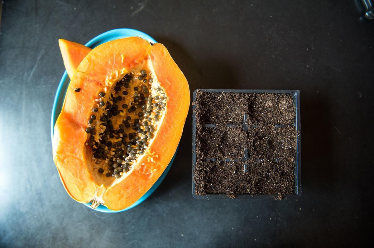 Grow your own papaya