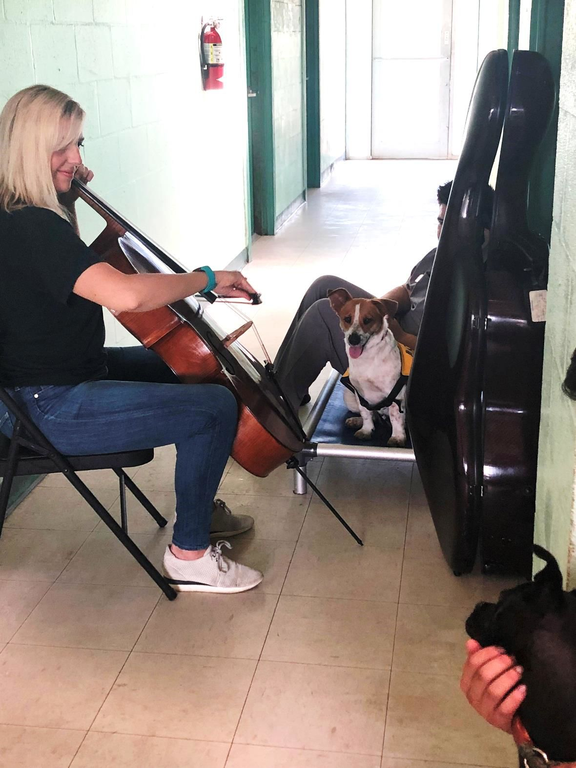 Music Therapy for Turtles