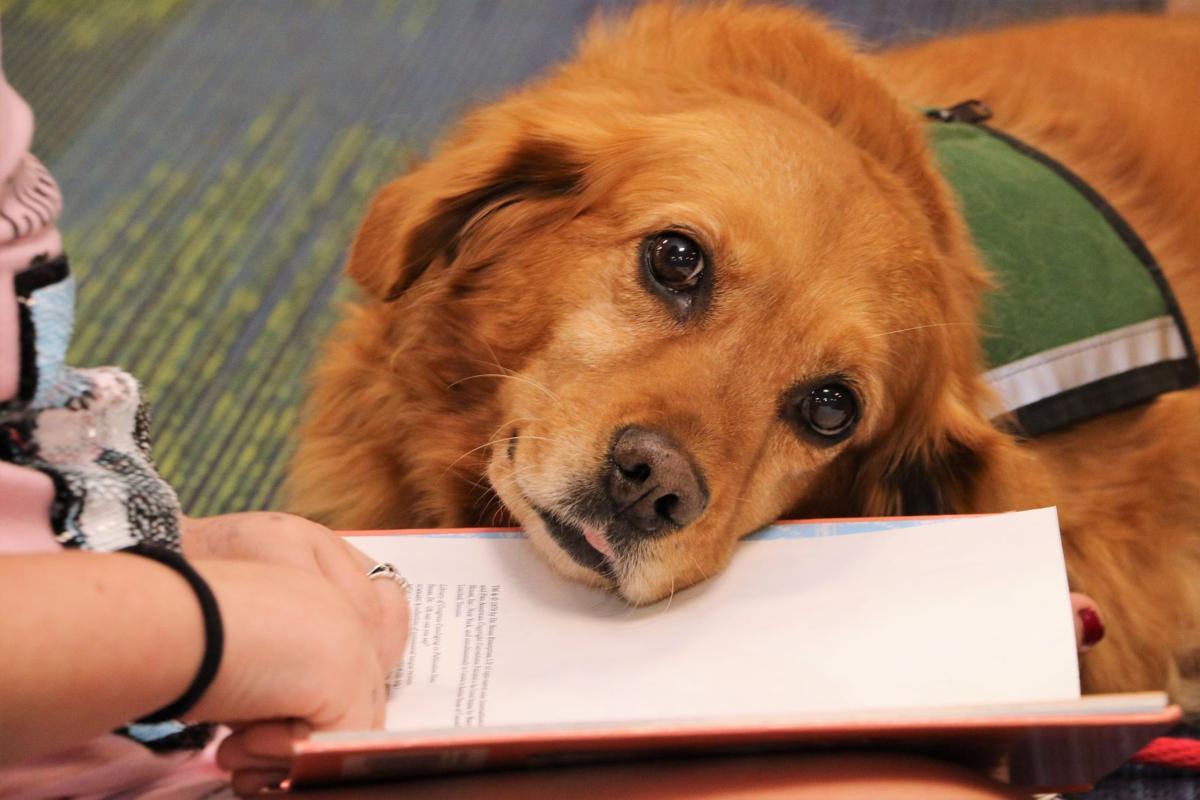Dogs help children read