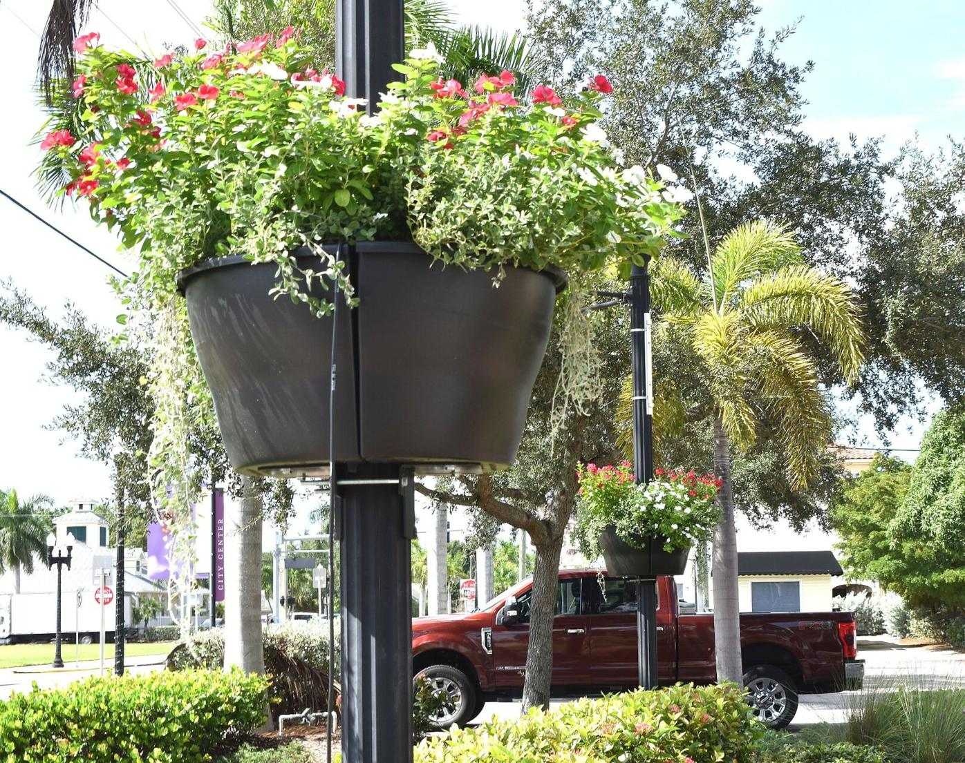 Punta Gorda in Bloom