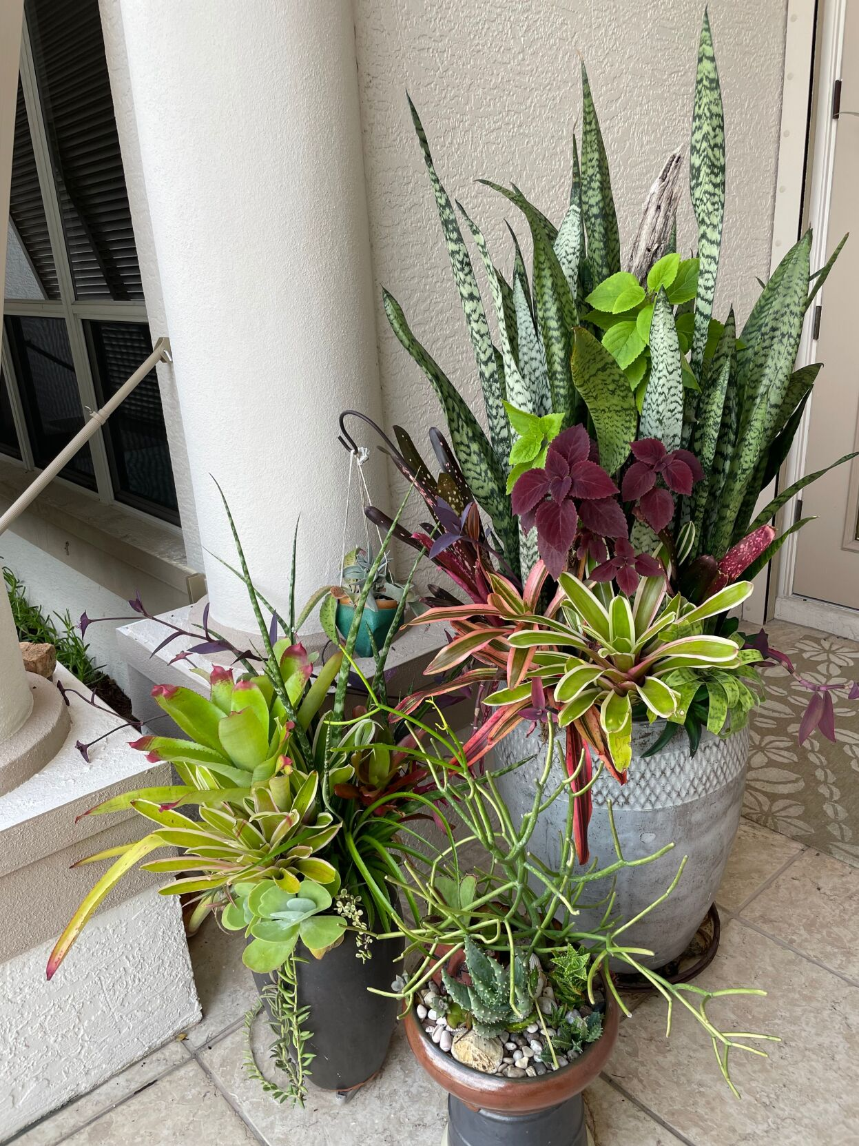 Grouping of succulents and bromeliads