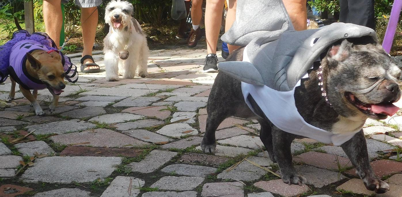 Historic Area Punta Gorda Halloween 2020 And the winner is 2nd Annual Pet Costume Parade at PG History