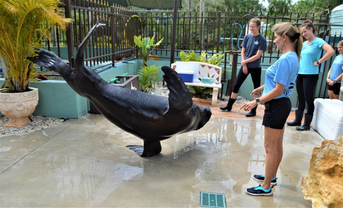 Falling in love at the Sarasota Sea Lion Preserve