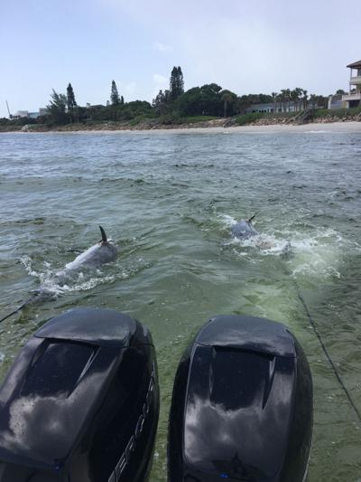 Dolphin deaths reported