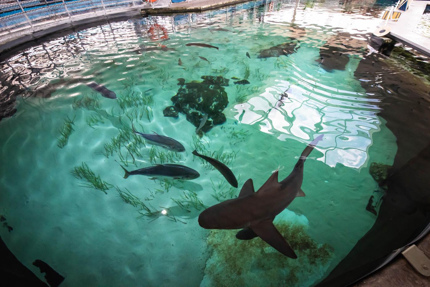 Sharks at Mote