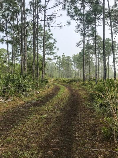Deep Creek Florida Map.A Wild Place To Run Deep Creek Preserve Offers A Chance To Explore