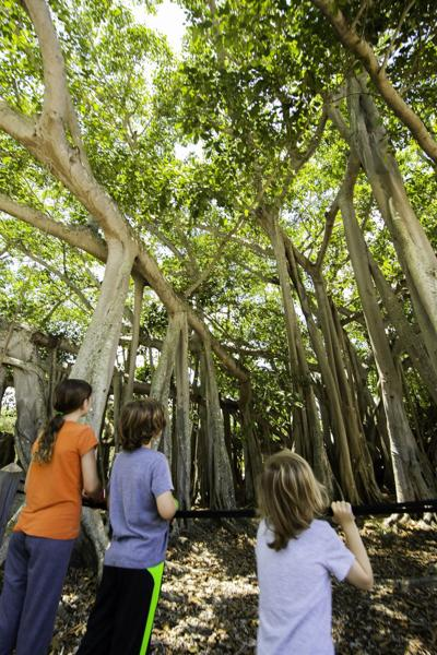 New Kids' Garden Adventure Event Offered at Edison and Ford Winter Estates