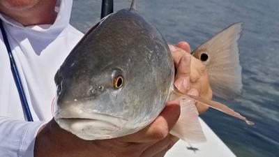 redfish fly