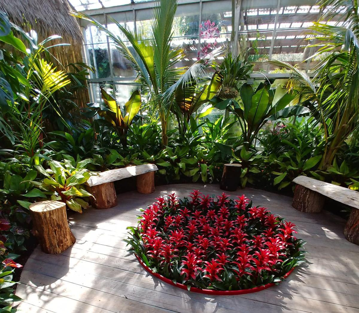 Fire pit warms the greenhouse usually used to display orchids at Marie Selby Botanical Gardens